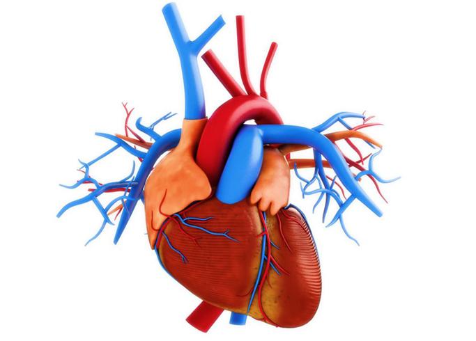 Сердечные артерии