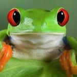 Интересные факты про лягушек
