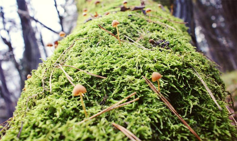 Лишайник на дереве