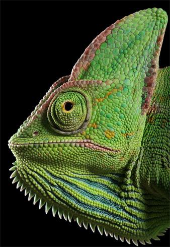 Хладнокровность рептилии