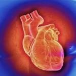 Интересные факты про сердце человека