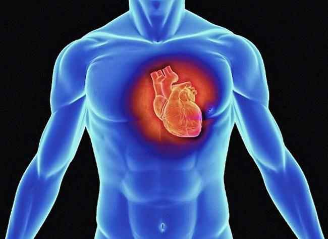 Работающее сердце