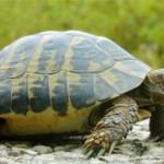 Самые интересные факты о черепахах