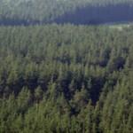 Интересные факты о лесах России (с фото)