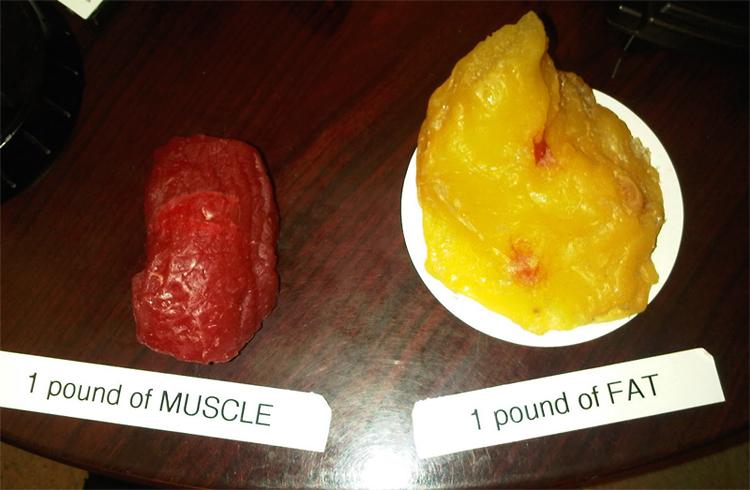 Мышцы и жир
