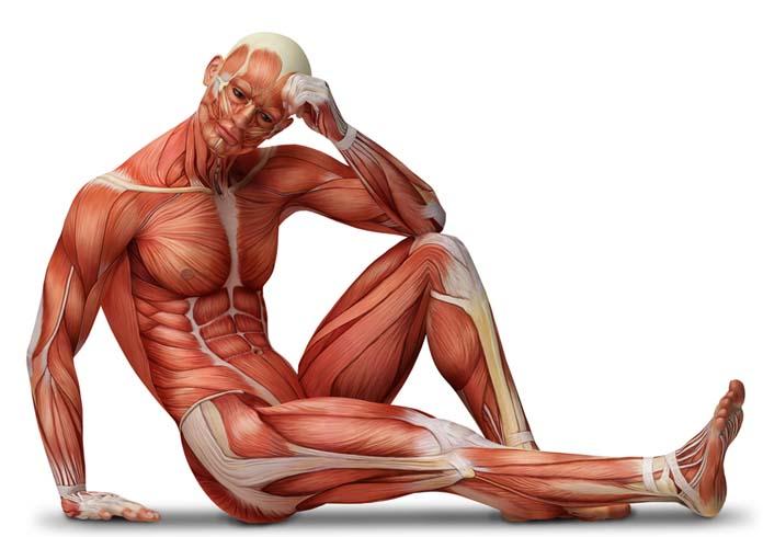 Человек с мышцами