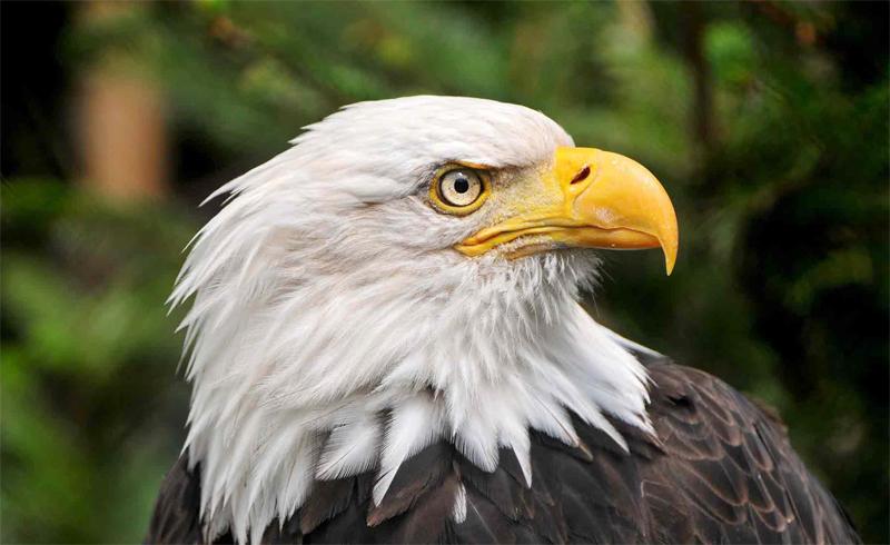 Зрение орла