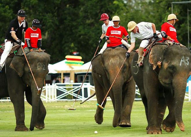 Поло на слона
