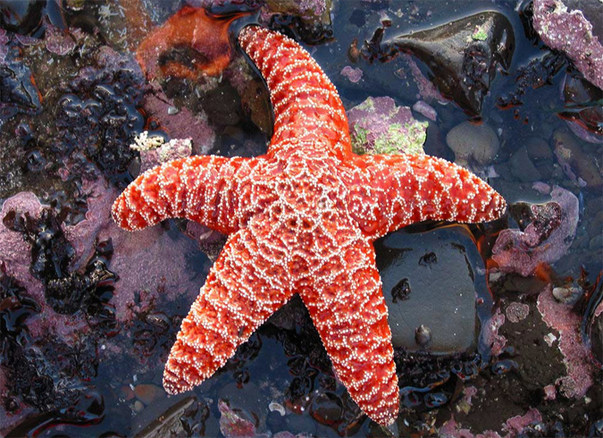рекомендации выбору смотреть картинки морских звезд выходит дома только