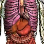 Интересные факты о строении человека и его тела