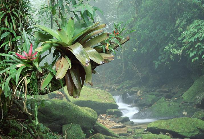 Тропический лес в Бразилии