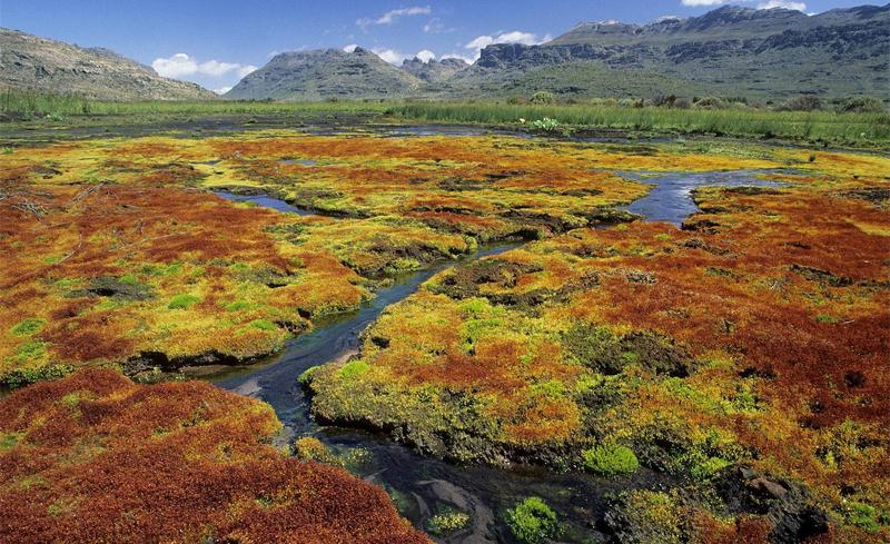Природа ЮАР