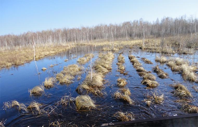Вид на болота