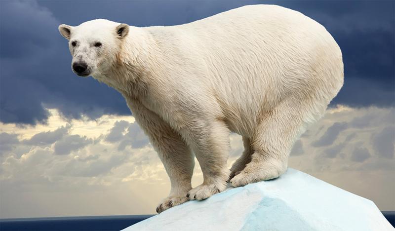 Медведь стоит