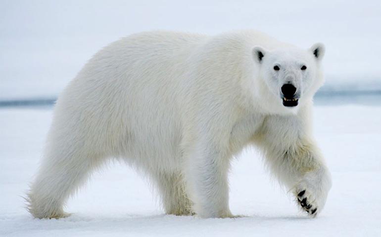 Медведь идет