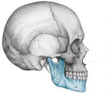 Челюстная кость