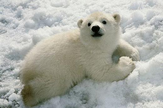 Малыш медведь