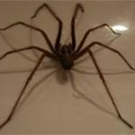 Интересные данные и факты о пауках