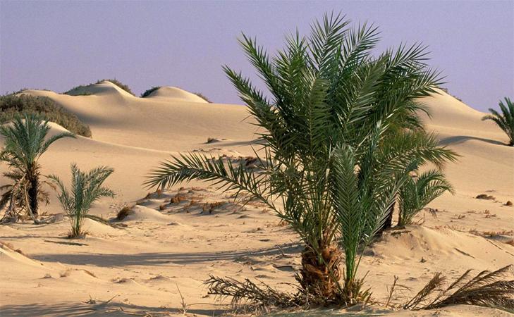 Оазис в сахаре