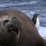 Интересные факты о морском слоне