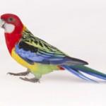 Самые интересные факты про попугаев
