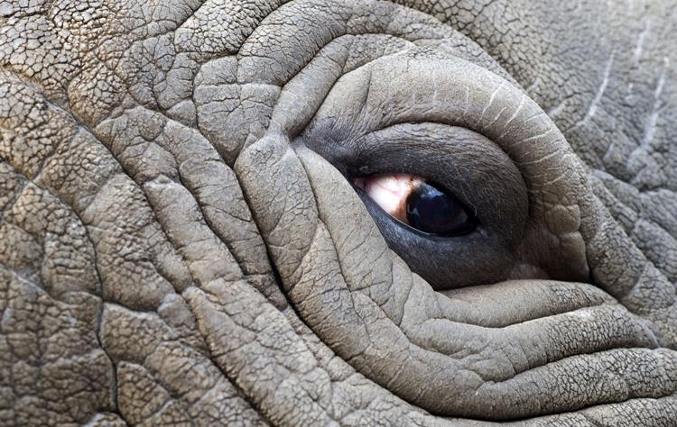 Глаз носорога