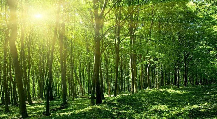 Леса Индии