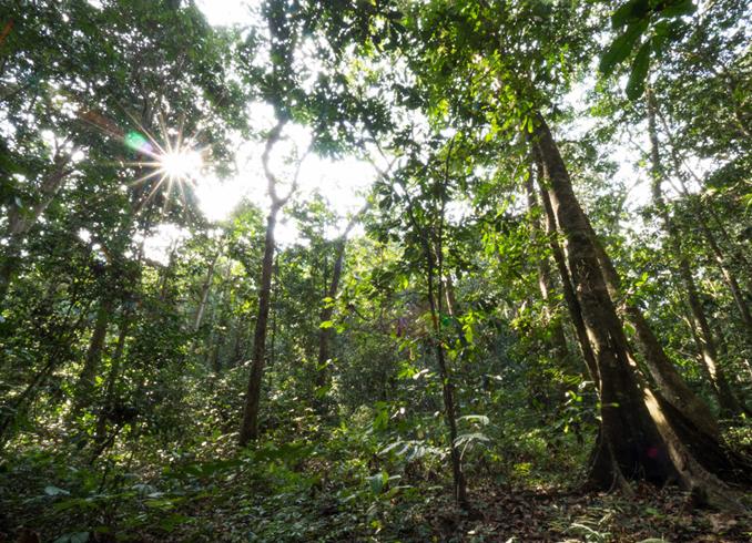 Леса Конго