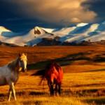 Самые интересные факты о Монголии