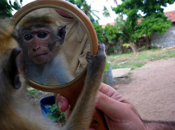 Обезьяна и зеркало
