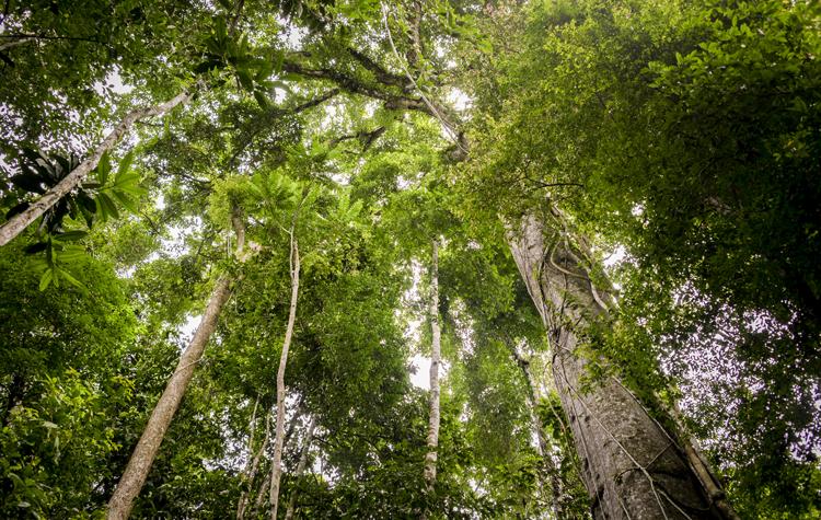 Леса Перу