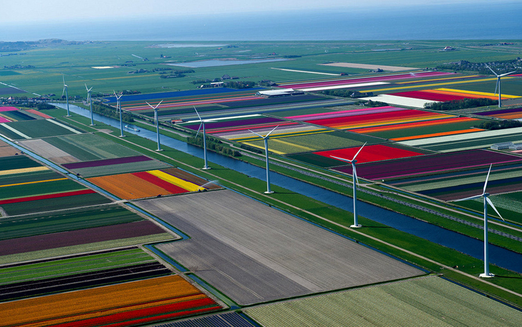 Поля тюльпанов