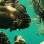 Лучшие фильмы про пираний: обзор, список и описание