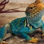 Интересные данные и факты о ящерицах