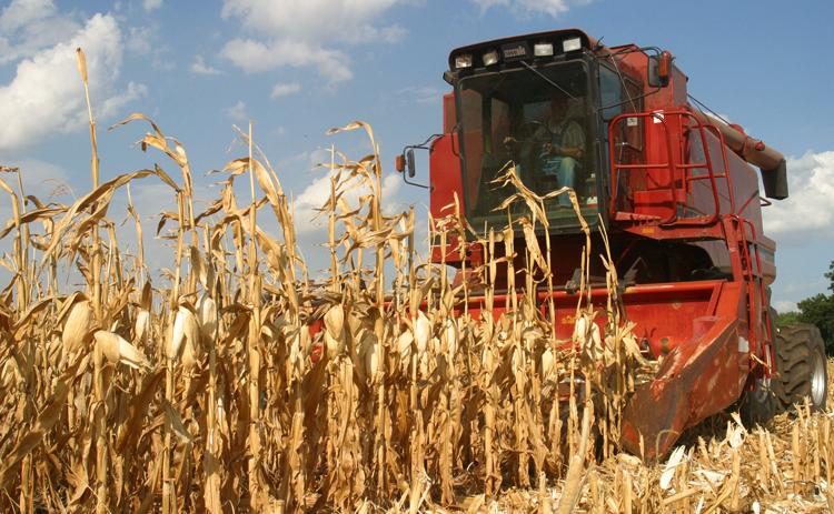 Сбор кукурузы в Аргетине