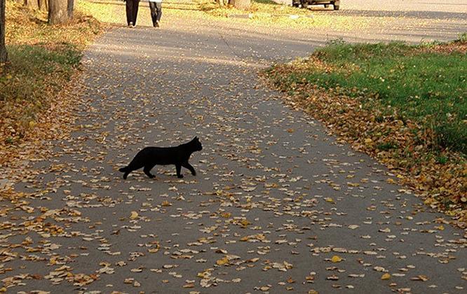 Черная кошка через дорогу