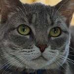 Интересные и удивительные факты о кошках