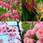 Самые красивые цветы в мире (с фото)