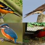 Самые красивые виды птиц на планете