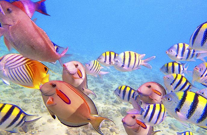 Разные рыбы