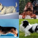 Самые красивые в мире породы собак
