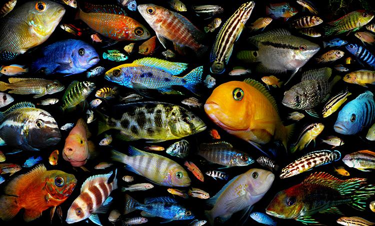 Много разных видов рыб