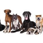 Самые интересные факты о собаках