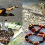 Самые красивые виды змей на планете