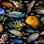 Самые интересные и необычные факты о рыбах