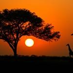 Самые интересные факты про Африку