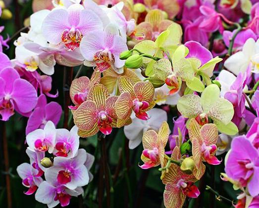 Орхидеи прекрасные обманщицы