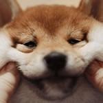 Интересные и удивительные факты о собаках