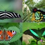Самые красивые бабочки на земле