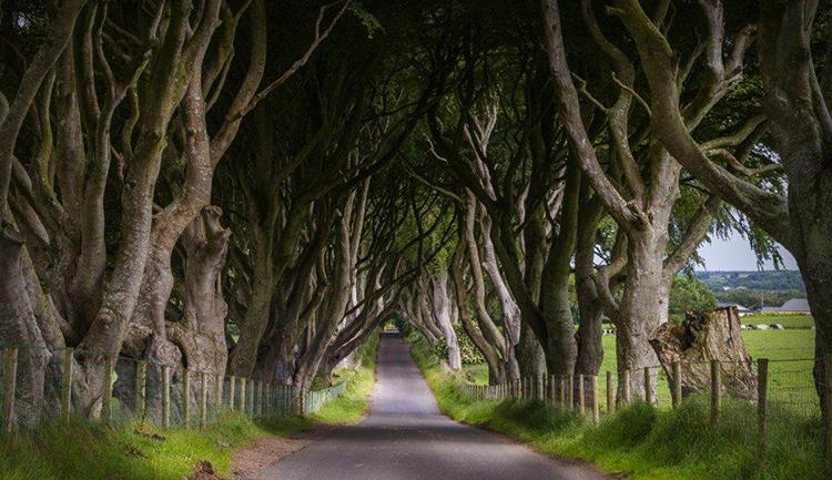 Буковый тоннель в Северной Ирландии
